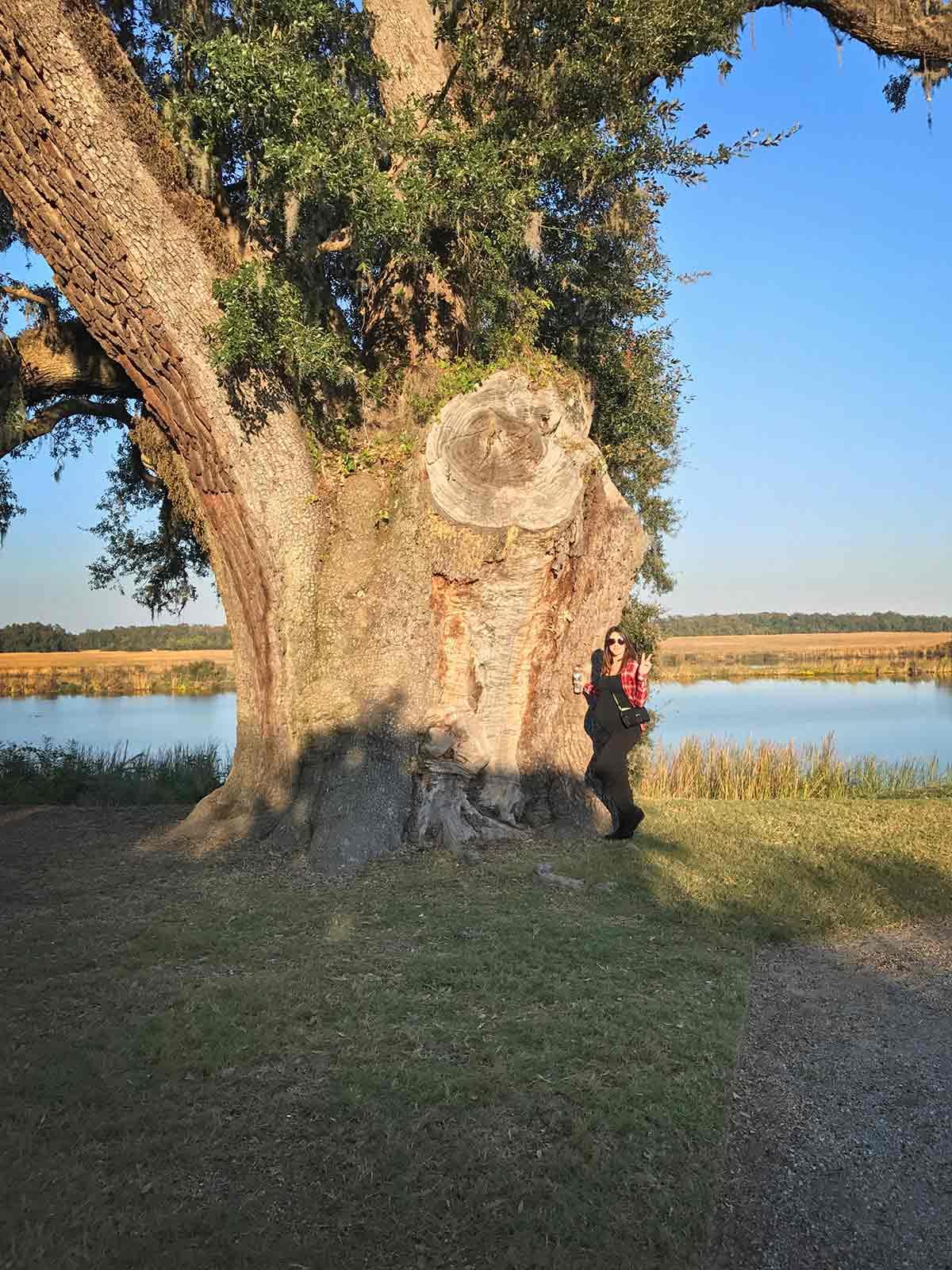 baby moon_tree